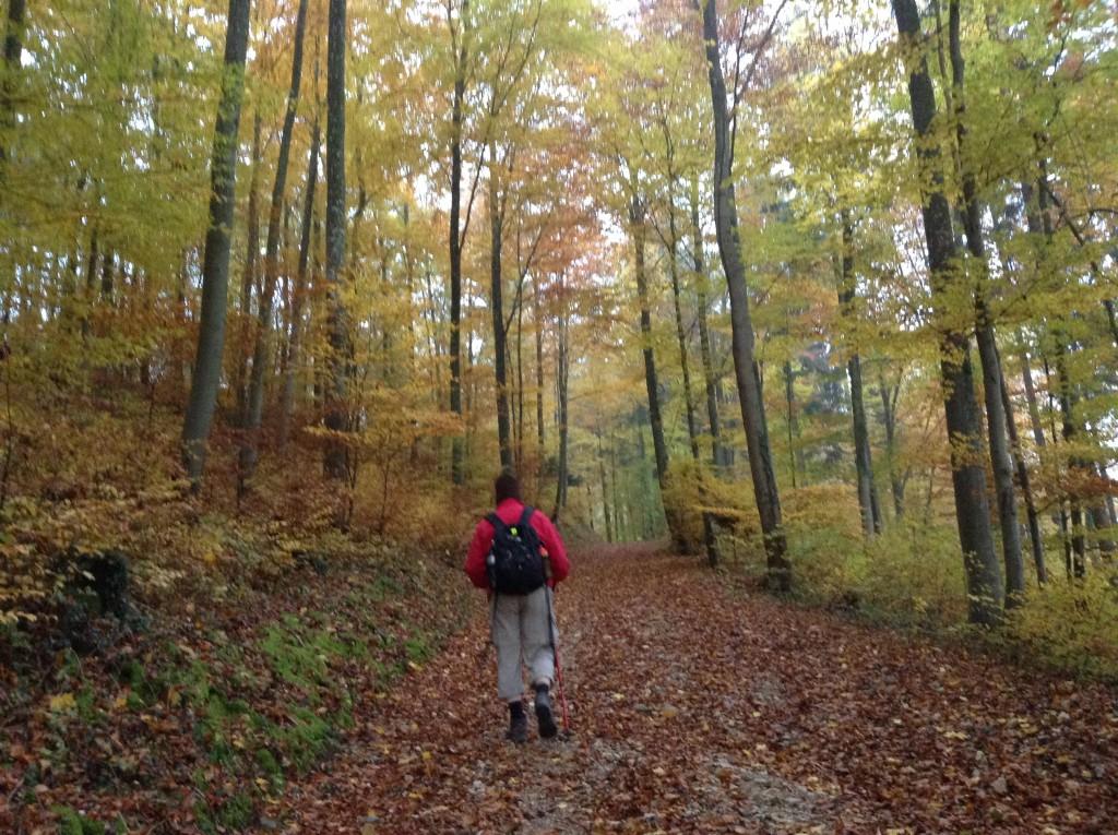 Aufwärts im Herbstwald