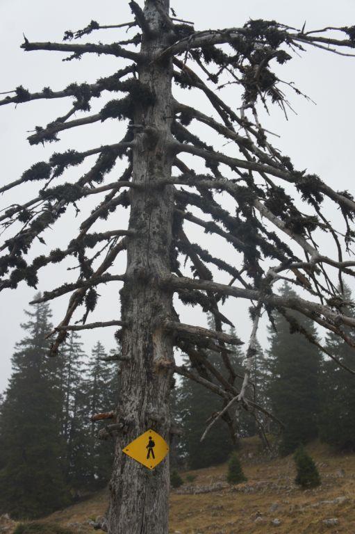 Kein Baum zu alt, um nützlich zu sein